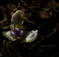 Searchlight by creativemikey