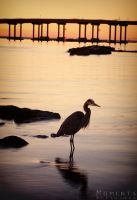 Heron In The Pass by BlissArtPhotography