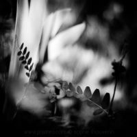 whispers by prismes