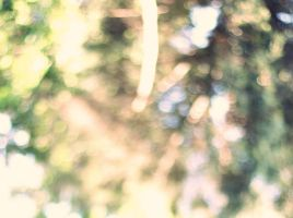 bokeh woods by Fridacoustic