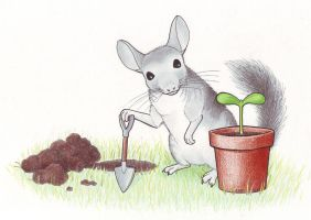 Gardening chinchilla by crawdadEmily