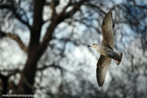 Photography, Animals, Birds by Konstantinekein
