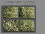 175 pampas grass by Tigers-stock