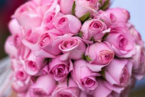 Pink Roses by GiannisParaschou