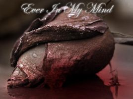 Ever In My Mind Cover by MoonFox23