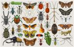 Entomology Mumbo Jumbo by killskerry