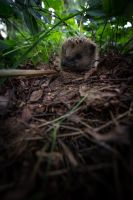 The Life as Hedgehogs by RLPhotographs