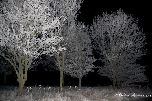 Coldest Night by celticwillow