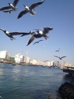 Gulls by Toash