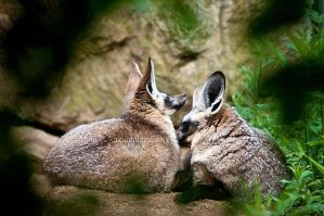Intimate Moments by amrodel