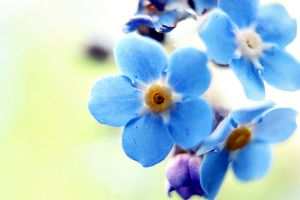 glowing forget me nots by Abbiee1211