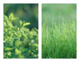 DROPS 'N GREEN by PETTERI-KANIINI