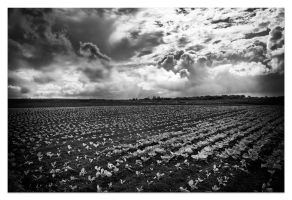 - Dramatic scene over a cabbage field - by Prometheus1706