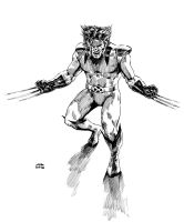 Wolverine - nib inking test by AndreaSchepisi