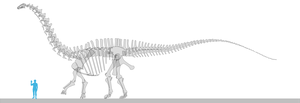 Apatosaurus scale (OMNH 1670) by oghaki