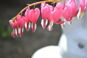 Bleeding hearts by TomKilbane