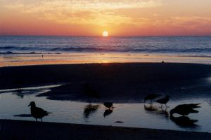 Assateague I by touch-the-flame