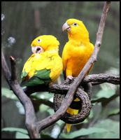 Two Yellow Birds by mikewilson83