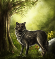 Wolf Illustration by bodzi0x
