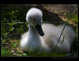 Little Swan by sekhmet-neseret