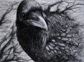 nevermore by treefeathers