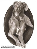 Great Dane Portrait by FlyingFancy1