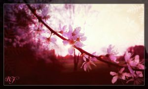 spring is comming by LordSesshomaru93