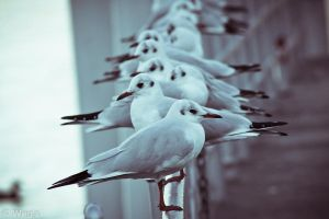Seagull by BioHazardSystem