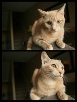 Ali The Cat by Coltography