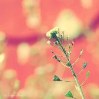 Little Universe. by Littography
