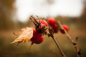 Berries by Thessen