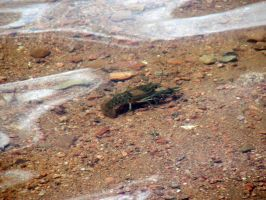 10 Makes a Mess by dozalt