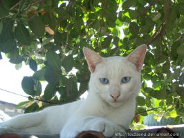My White Cat by ToS2sEnd