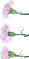 Flowers PNG #1 by bettadenu