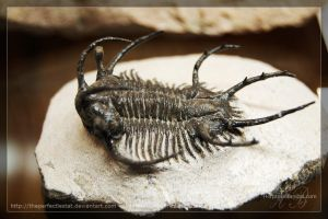 Ceratarges spinosus by theperfectlestat