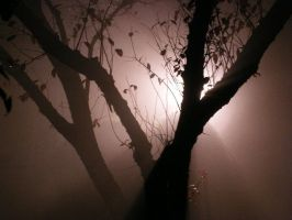 In the fog and darkness by Judethelost