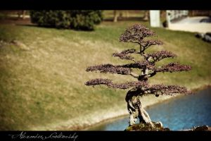 Little tree by 10thapril