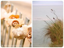 Seashells by the Seashore by alucier