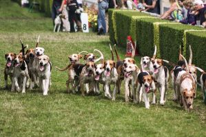 Hounds at the Showground by uglyogre