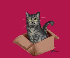 It's my Cat in a Box by Himawari-chan