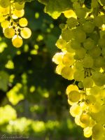 Shinning grapes by Bastos17