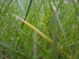 Grass - almost mirrored by haileysthelimit