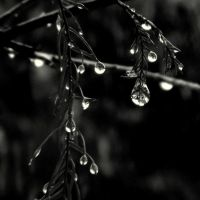 drops.. by lostknightkg
