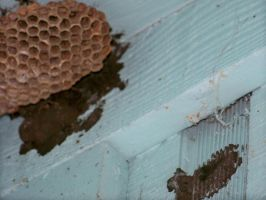 Soft focus hornet nest, more by paintresseye