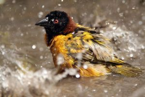 Bath time - Village weaver by Jamie-MacArthur