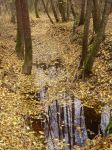 river of leaves by marlene-stock