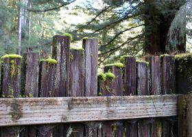 My Fence Under the Redwoods by smfoley