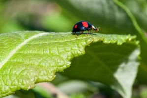 Spotted Ladybug 14701237 by StockProject1