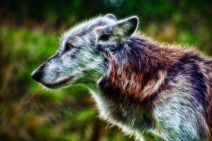 Wolf: Fractalius Re-Edit by nerdboy69