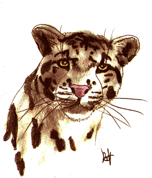 clouded leopard by Singuratic